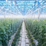 Agro Shade Nets – A Future of Crops and Plant Protection